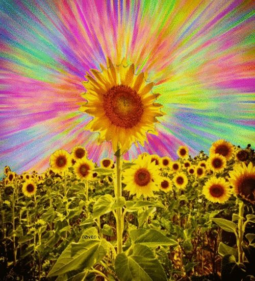 Trippy Sunflower - Ozneo | Psychedelic | Pinterest | Pain ...