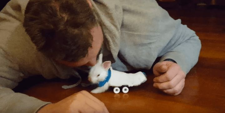 Baby Bunny Gets Around Using a Skateboard Wheelchair | Screen Shot 2016-02-23 at 2.49.03 PM on Distractify.com
