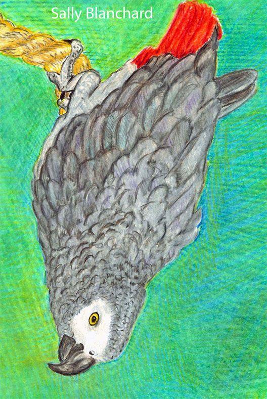 1642 best parrots in art images on pinterest birds