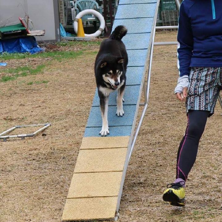 ペットスマイル投稿詳細 Petsmile ペット 犬 柴犬