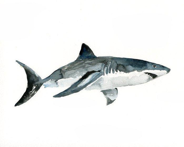 SHARK Original watercolor painting 10X8inch. $25.00, via Etsy.
