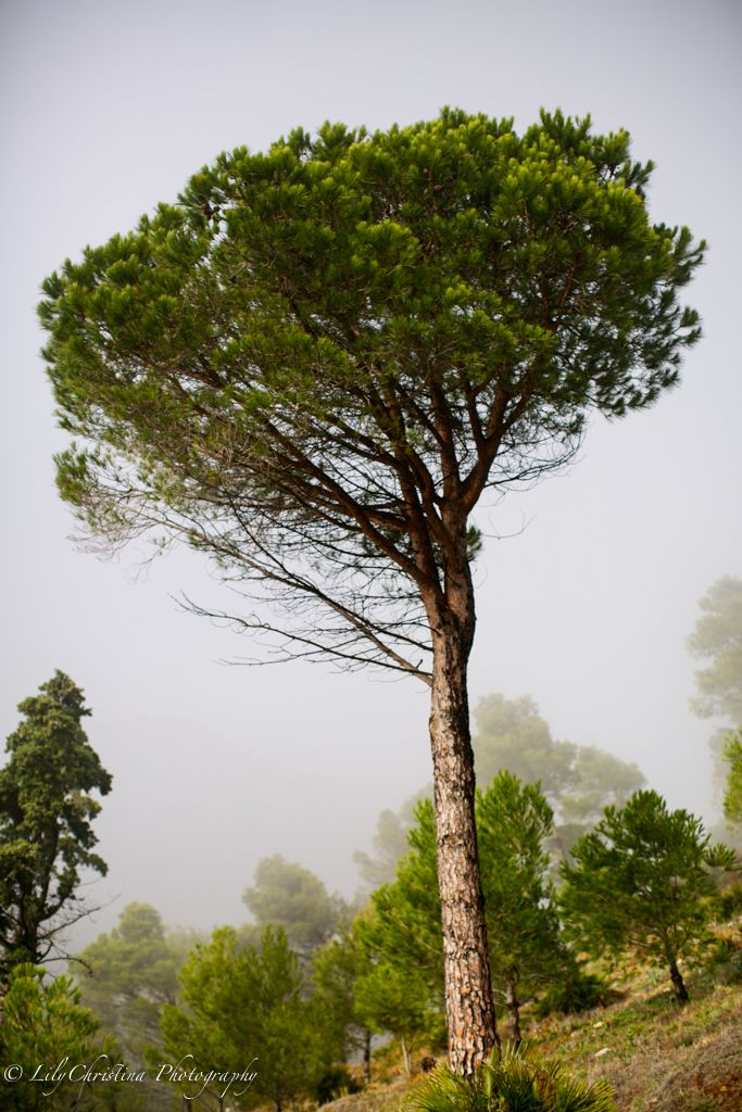 lilychristina photography, nature picture, fog, luontokuvaus, luontokuva, espanja, fuengirola