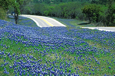 Beautiful Texas Highways covered in Bluebonnets: Favorite Places, Spring Bluebonnets, Beautiful Texas, Texas Highways, Highways Covered