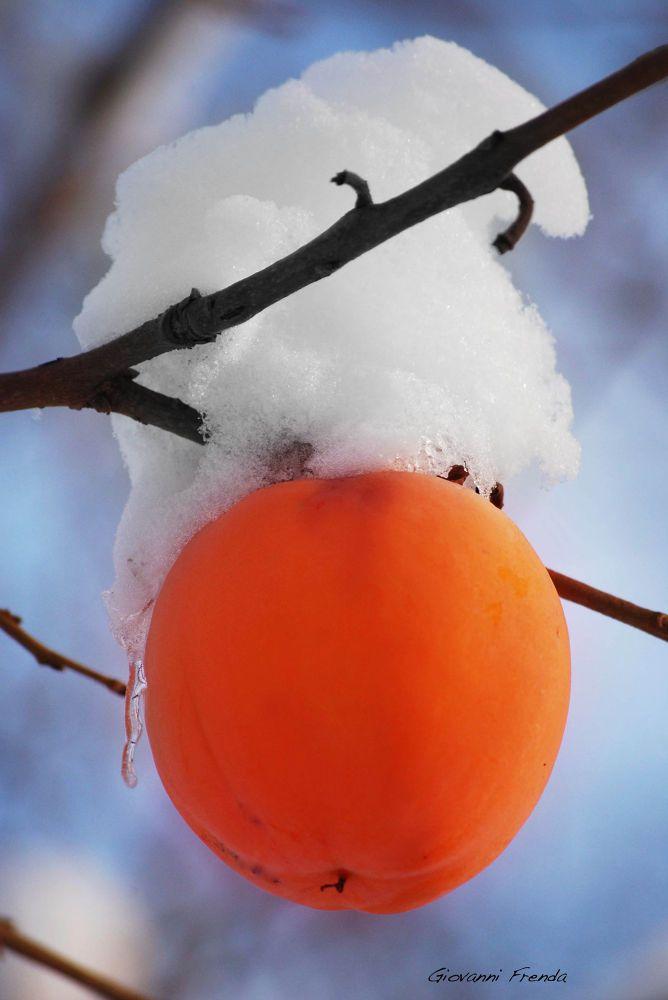 Cachi nella neve by Giovanni Frenda