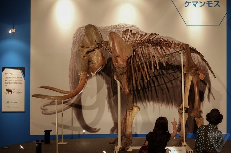 Meet Yuka, the 39,000-year-old mummified woolly mammoth scientists want to clone | The Verge