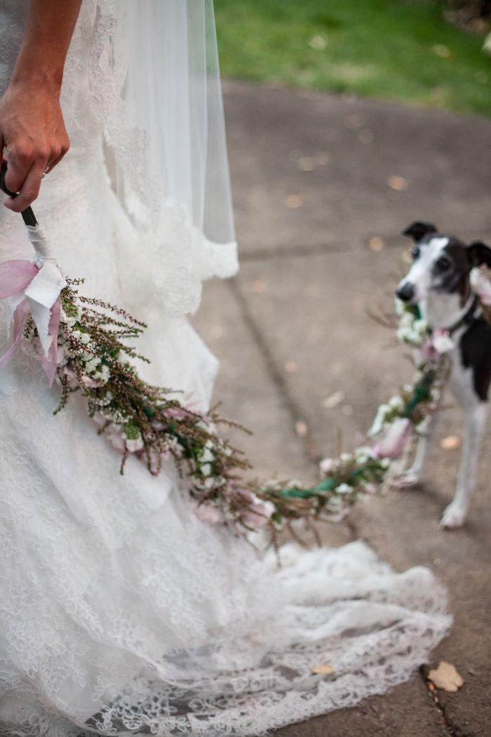 Floral wedding dog leash. Photography: meganclouse.com Florist: Anne Appleman