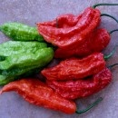 The Bhut Jolokia is the previous record holder for world's hottest chile pepper (nearly deadly but beautiful)