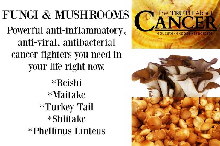 Amazing FUNGI & MUSHROOMS! Powerful anti-inflammatory, anti-viral, antibacterial cancer fighters you need in your life right now! Click on the image to read more. Please re-pin to help us educate others! // The Truth About Cancer