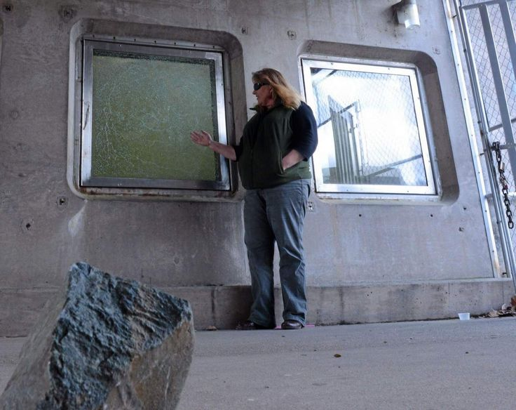 Feather River Fish Hatchery manager Penny Crawshaw stands by a broken fish viewing window near the rock that was used to break it Monday in Oroville. The fish ladder will be closed on April 1 to repair the window. Until repairs are made, the fish viewing area will remain closed to the public due to the vandalism. (Bill Husa — Mercury-Register)