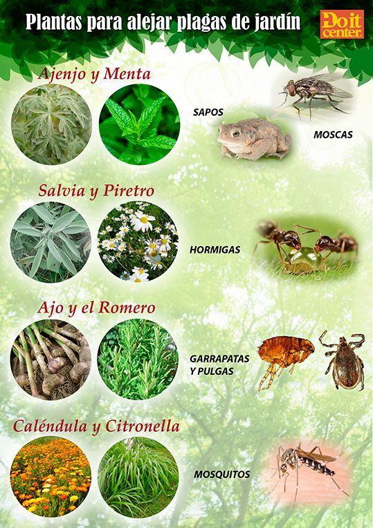 Resultado de imagen para plantas que repelen los mosquitos dengue