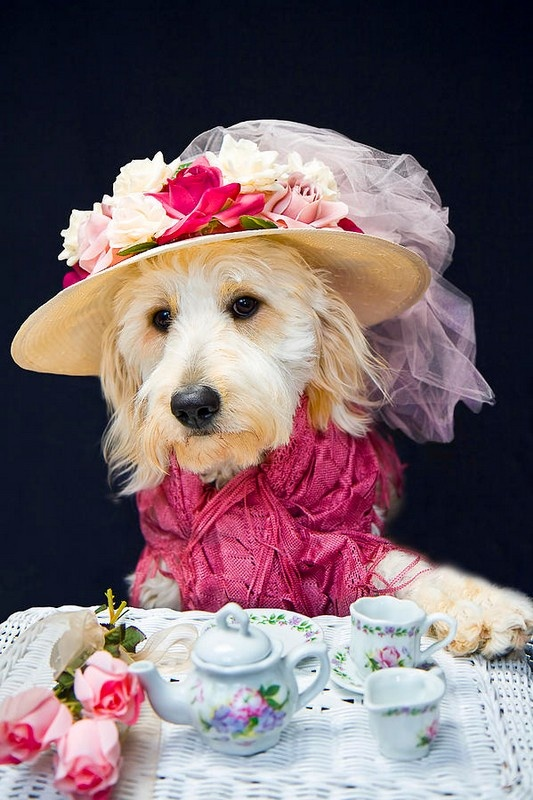 Teatime With Kati by Trudy Wilkerson Tea Party Pet