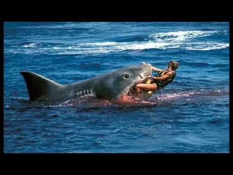 Shark Photos Attacks Most Dangerous Places For Sharks