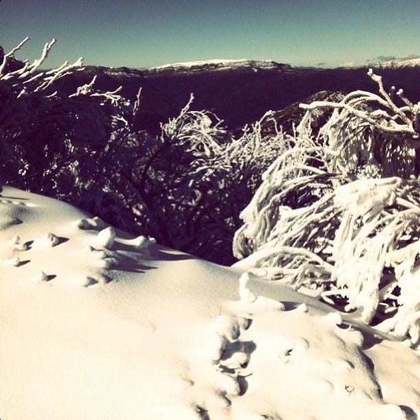 Photo by elbee___  #mtbuller #snow #favplace #heavenonearth #ski #cantwait #bringiton #lovewinter #bluesky