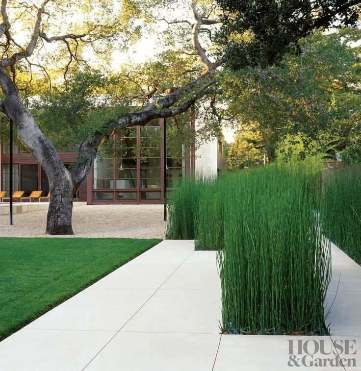 The path from the gate of a California property is interrupted by blocks of horsetail grasses. A grand California live oak (Quercus agrifoli...