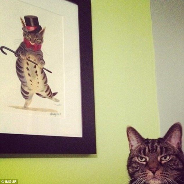 The cat, pictured on the right, is pulling the exact unimpressed face as the cat behind hi...