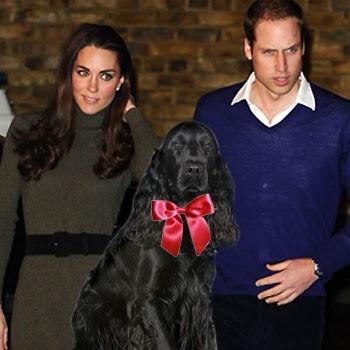 Kate-Middleton-Prince-William-dog-Cocker-Spaniel-Splash.