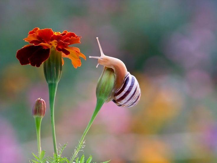 Close Up Photos of Snails  by Vyacheslav Mishchenko.