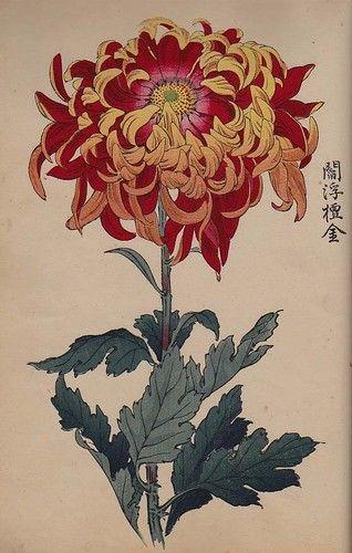 Orig Japanese Woodblock Print Book Chrysanthemum of Japan Vol1 Meiji