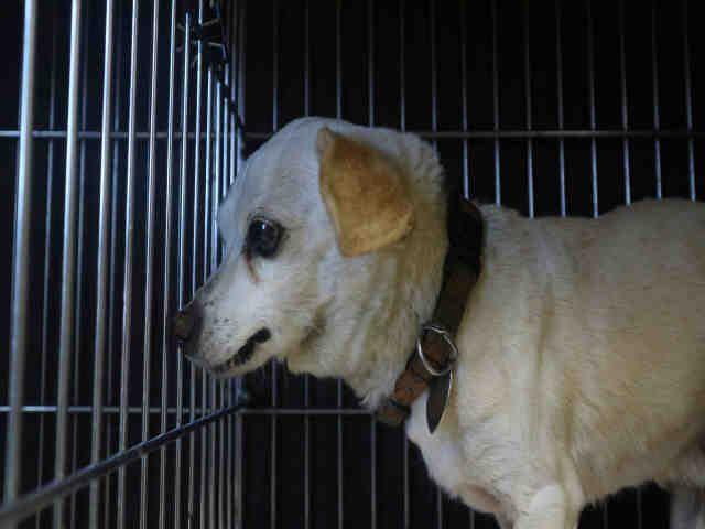 Chihuahua dog for Adoption in Redlands, CA. ADN-483008 on PuppyFinder.com Gender: Male. Age: Senior