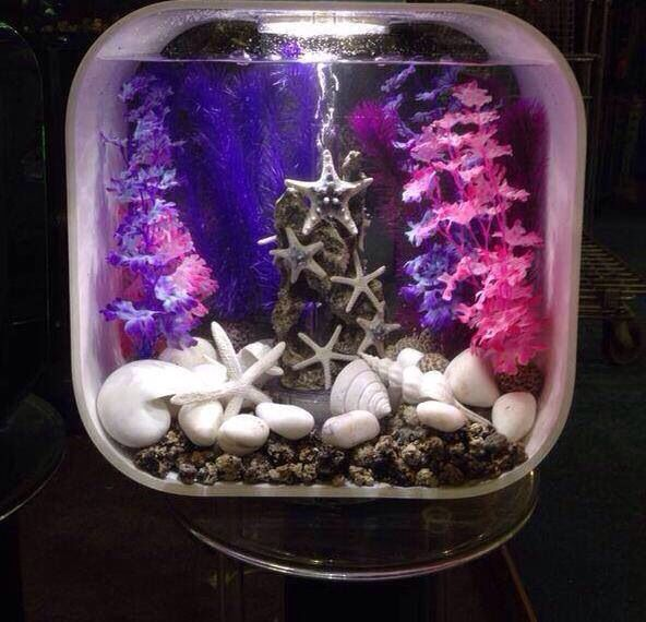 17 Best Images About Project Fish Tank On Pinterest: 17 Best Ideas About Biorb Fish Tank On Pinterest