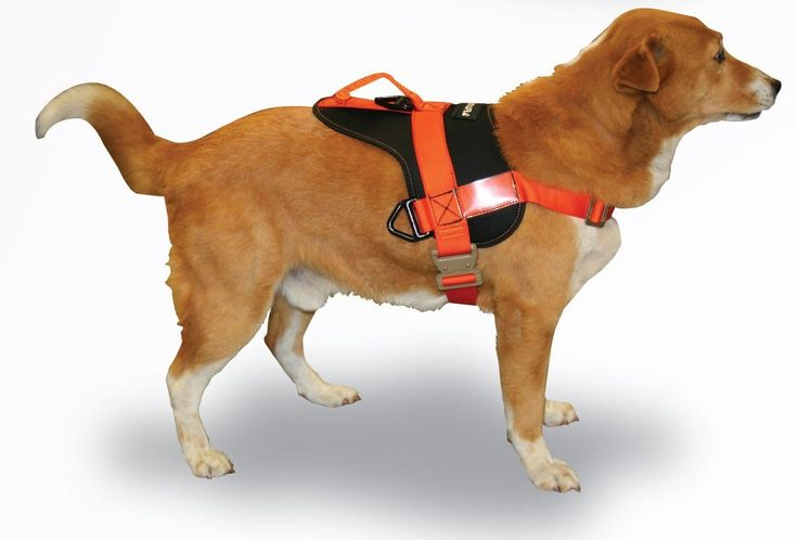 Fusion Pets Raider Dog Training Harness *** Learn more by visiting the image link.