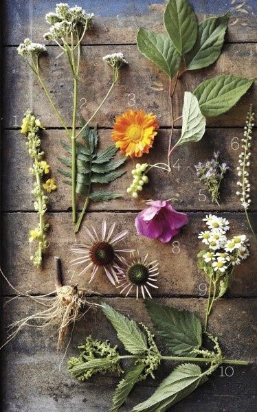 deb soule's list of healing plants//MS living