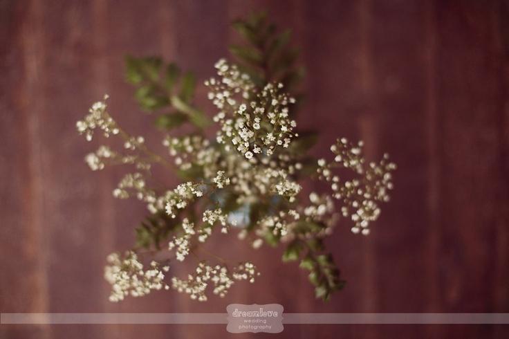 fuchsia epicerie fleur