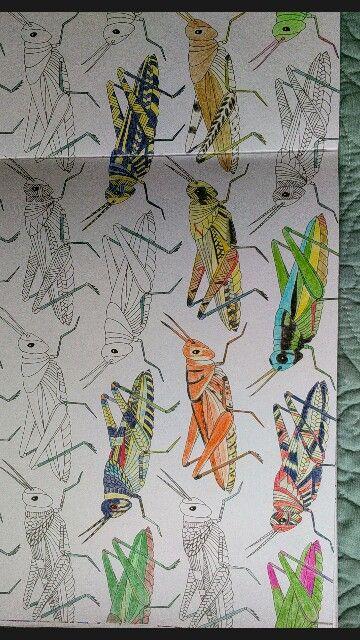 WIP, KM Grasshoppers, Millie Marotta
