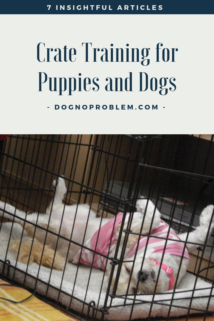 Crate Training Puppies And Dogs 7 Insightful Articles You Will