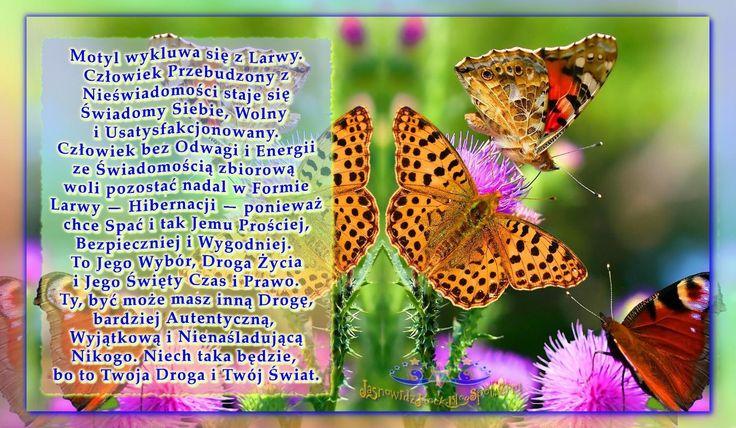 Motyl wykluwa się z Larwy. Człowiek Przebudzony staje się Świadomy Siebie   http://jasnowidzjacek.blogspot.com