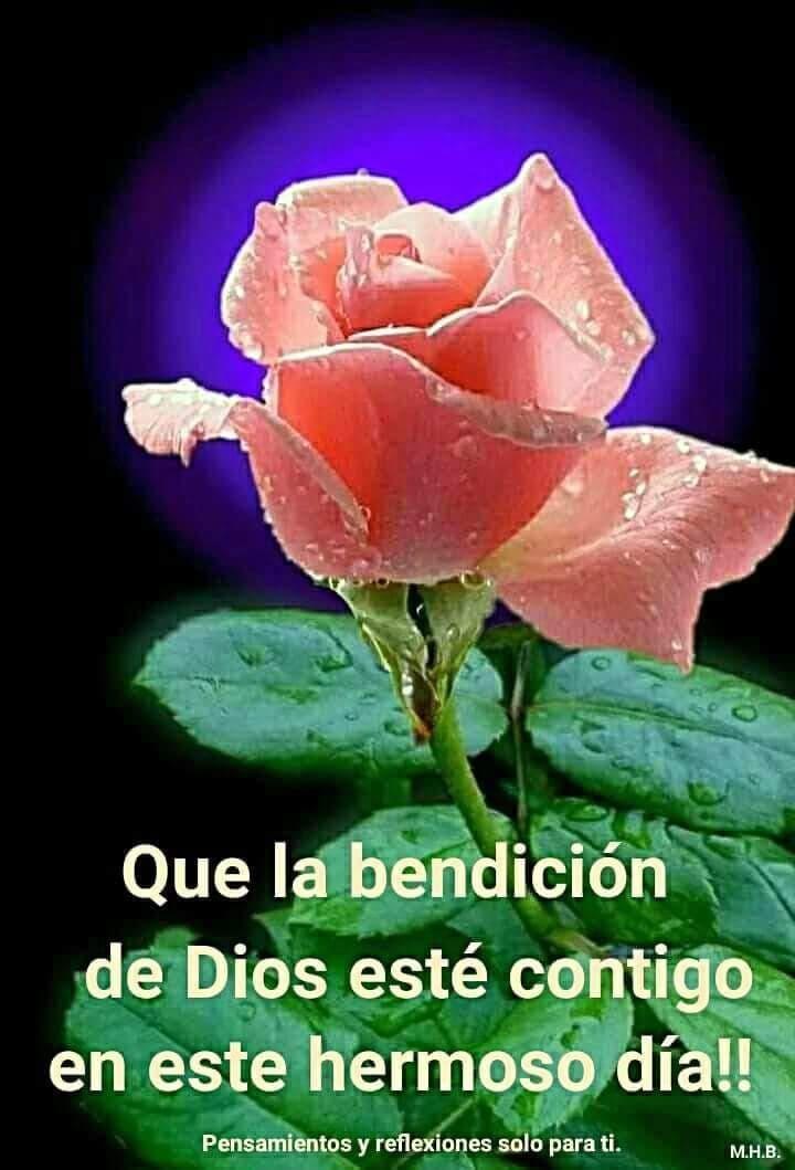 Pin By Lupita Granados On Frases Buenos Dias Con Rosas Saludos De