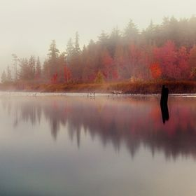 """""""PlayingWithReflectionsPhotoContest"""" by BonnieJM"""