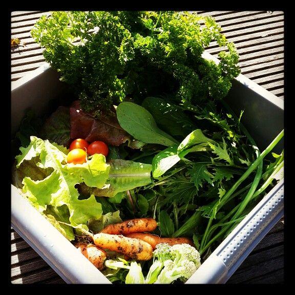 bonheur du potager, belle salade composée en perspective.  Recette ...