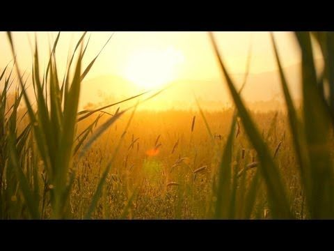 ▶ Relaxing Instrumental Music - slow soft peaceful - relaxdaily N°071 - YouTube