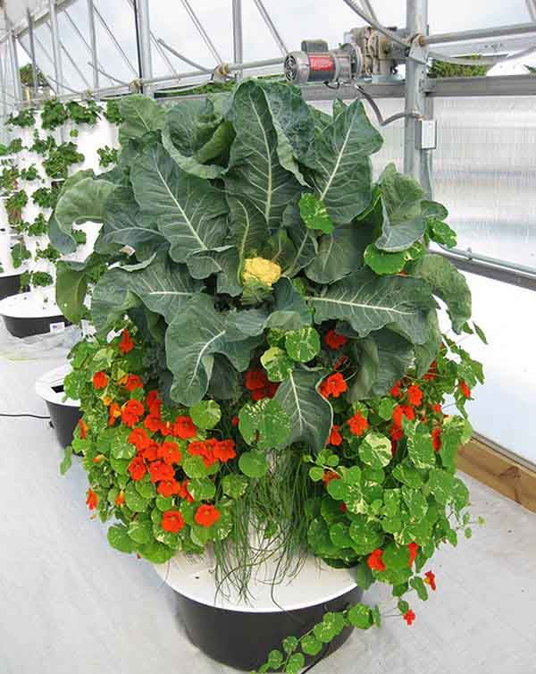Tower Garden. Uses 5% Of The Water Needed To Grow Up To 20 Varieties