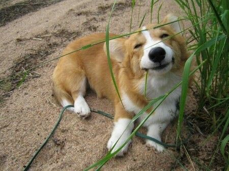 So happy - GRASS IS GOOD, SO MANY DIFFERENT FLAVORS ~