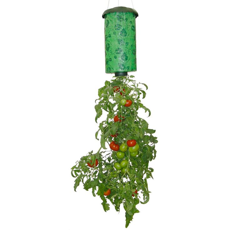 Hanging basket met tomaten kan, want in eenTopsy Turvy hang de tomatenplant naar beneden. Werkelijk een geweldig succes in Amerika.