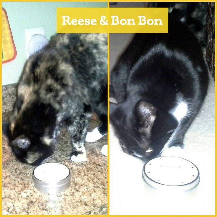 Reese and Bon Bon can't get enough of their organic catnip!   http://etsy.me/1AELIGN