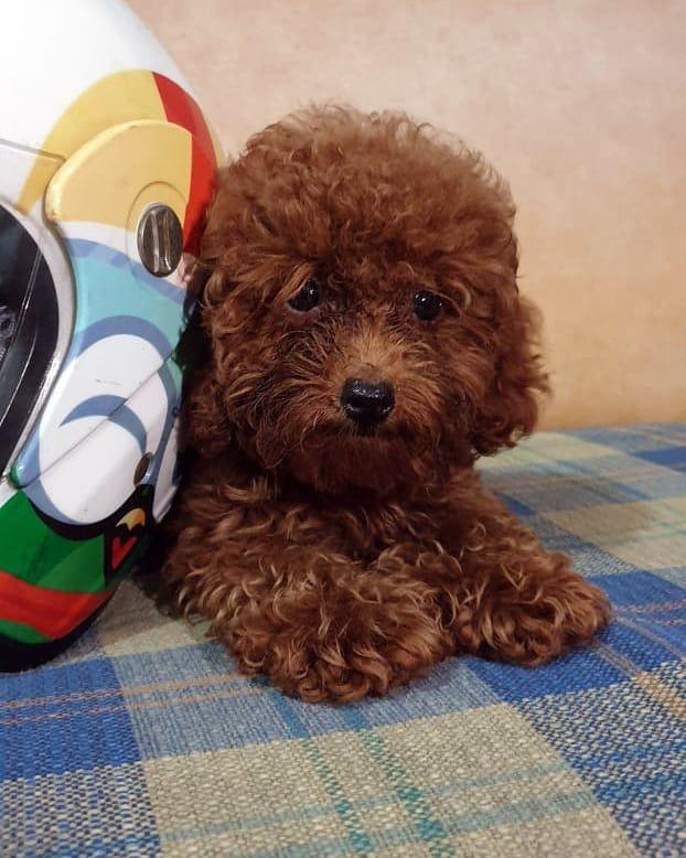 Pin On Puppies Training