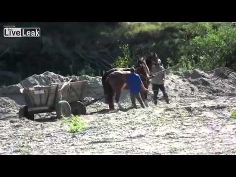 Animal cruelty - the owners need to be horse-whipped - YouTube