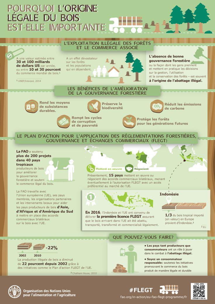 Pourquoi l'origine légale du bois est-elle important