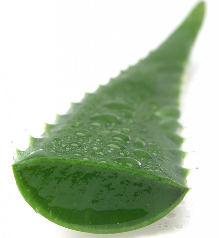 Top 12 Benefits and Medicinal Uses for Aloe Vera