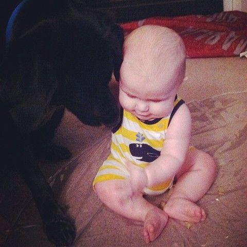 Un chien sauve un enfant maltraité par sa baby-sitter - Héros - Wamiz