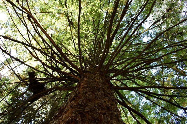 https://flic.kr/p/Sgnnt9   Jardín Botánico de la Universidad Austral de Chile   Valdivia, Chile.