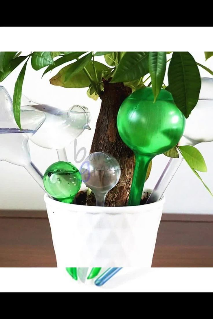 Automatic Plant Watering Bulb In 2020 With Images Watering Bulbs Plant Watering Bulbs House Plant Pots