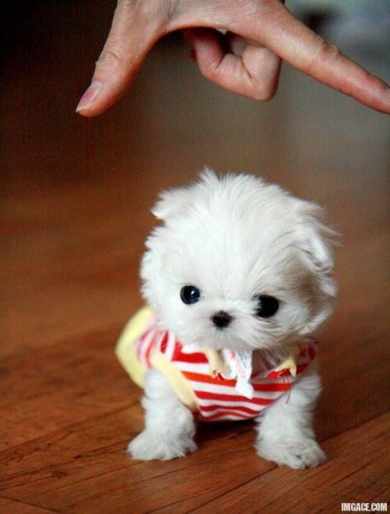 awwwww... the cutest ever!