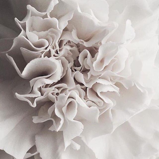 • TEXTURE • via @em_thelane • #inspiration #texture    #Regram via @onedaybridal