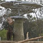 Click here for more information about Elephant Enrichment & Activity Stimulation Feeder