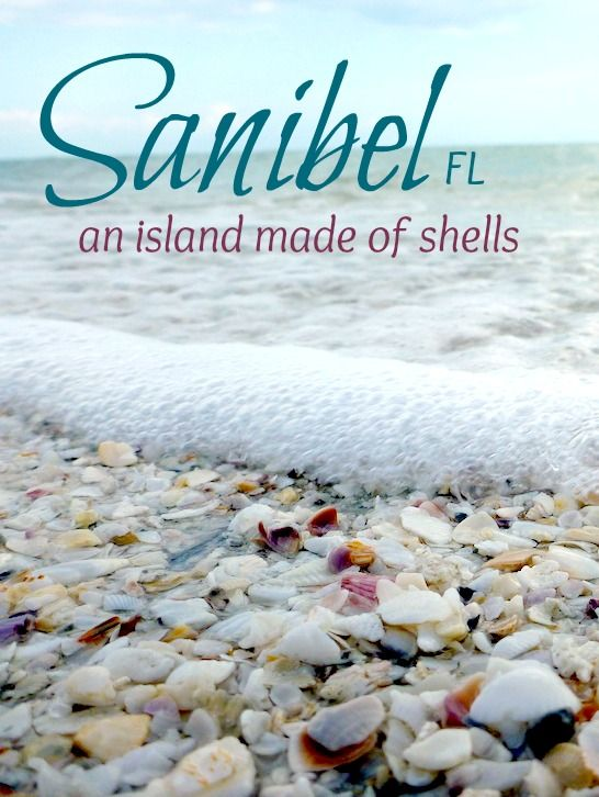 Exploring Sanibel Island, FL. World's best shelling beach: http://beachblissliving.com/sanibel-island-worlds-best-shelling-beaches/