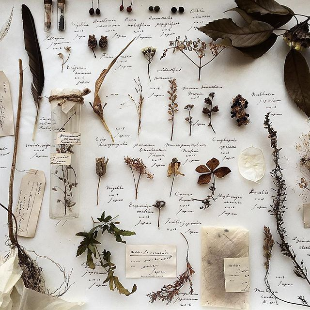 香川県高松市にある植物とアンティークの店エレー (@errer_) のオーナー河原さんが大切にしていることは、植物を採集する自分だけの時間と、標本を見たときに思い出すその時間。「人と同じではなく、自分だけのインテリアとして標本等を製作、ディスプレイできればと思い、身近な植物で標本を製作し始めました」近所の山を散策しながら拾った植物を可能な限り熱湯消毒し、乾燥させて標本にする。「植物に限らず加工する前の本物が好きなので、あまり作り込まないようにしています。標本のほかに、枯れた植物を使用して模様を製作したりしています。お客様には身近なものでいかに楽しめるかを感じて頂けたらと思っています」来客の大多数は彼女がシェアする写真をきっかけに訪れるそうだ。「製作した標本の展示会のお話をいただいたりと、大変世界を広げて頂きました。今後も引き続きいろいろな方の世界を拝見させて頂きたいとおもっております」 Photo by @errer_
